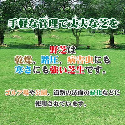芝生天然芝野芝(ノシバ)ロール巻送料無料(芝生通販)