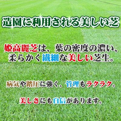 芝生天然芝姫高麗芝(ヒメコウライ芝)ロール巻芝送料無料(芝生通販)