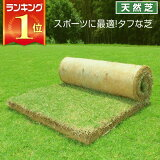 芝生 天然芝 ティフトン芝 ロール巻芝 送料無料 (芝生 通販)