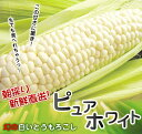 この時期に出荷できるピュアホワイトは当店だけ!日本最速出荷!まるで真珠のような真っ白な幻...
