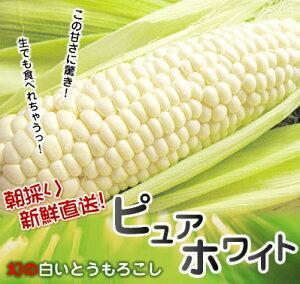 とうもろこし 北海道 ピュアホワイト 約4kg スイートコーン 【送料無料】 トウモロコシ白いとう...