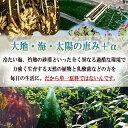メーカー直営店【送料無料】ベジパワープラス(60包入) 3