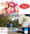 低農薬ミネラル林檎(ジュース用無選別)3kg