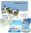 【送料無料】寒中見舞い 寒中お見舞い 210〜500枚〔動物・鳥デザイ...