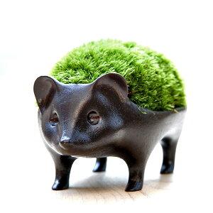 ペット寸前!苔盆栽はりねずみブロンズ製/アラハシラガゴケ