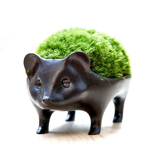 苔盆栽はりねずみブロンズ製/アラハシラガゴケ