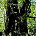 天野月子(天野月)のカラオケ人気曲ランキング第3位 「くれなゐ (任天堂 Wii用ゲームソフト 「零 眞紅の蝶」のテーマソング)」を収録したアルバム「天の樹」のジャケット写真。