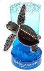 【中古】トレーディングフィギュア アオウミガメ 「新江ノ島水族館立体生物図録 復刻版」