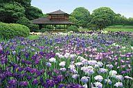 【中古】パズル 花菖蒲と後楽園-岡山 ジグソーパズル 1000ピース【タイムセール】