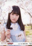 【中古】生写真(AKB48・SKE48)/アイドル/NGT48 00888 : 加藤美南/「2017.APR.」「新潟市内里桜」ロケ生写真ランダム【タイムセール】
