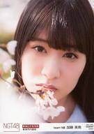 【中古】生写真(AKB48・SKE48)/アイドル/NGT48 00890 : 加藤美南/「2017.APR.」「新潟市内里桜」ロケ生写真ランダム【タイムセール】