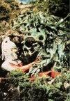 【中古】アニメ系トレカ/ウルトラマンスナック 第2弾 ウルトラセブン編 90 [-] : 生物Xワイアール星人vsウルトラセブン
