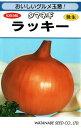 野菜種子 タマネギたね (渡辺採種場) ラッキー 3.7ml袋詰 【送料無料】