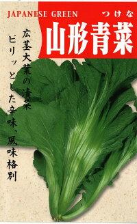 【高菜】山形青菜15ml詰送料無料