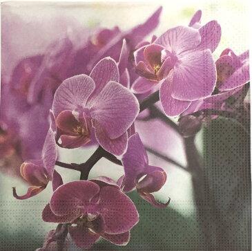 (D519)ペーパーナプキン カラー胡蝶蘭 1枚 バラ売り デコパージュにも