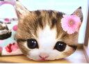 """大人気!!6/28 再入荷!ルシアン """"nyan cat made"""" パネルで作ろ♪"""