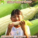 北海道富良野産  ピュアホワイト 10本入り【あす楽対応_北...
