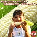 【幻の白いとうもろこし】北海道富良野産【送料無料】