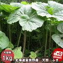 【ご予約販売】北海道ふらの産 天然 無農薬 ふき 1kg