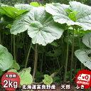 山菜 北海道ふらの産 天然物 ふき 2kg 送料無料 別途送料が発生する地域あり