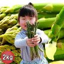 グリーンアスパラガス 北海道富良野産 訳あり 2kg 送料無料