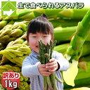 グリーンアスパラ 訳あり SサイズからLサイズ込1kg【生】で食べられる北海道富良野産2セット以上で送料無料