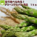 アスパラガス 北海道 富良野産 送料無料 グリーンアスパラ 秀品 (MからLサイズ) 1kg