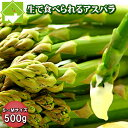 アスパラガス 北海道 富良野産 グリーンアスパラ 500g(S〜Mサイズ)送料無料