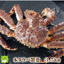 超特大! 本タラバ蟹(たらば蟹)オス 3.5kg【送料無料】 『ボイル・活 選択可能』  【RCP】 ...