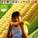 とうもろこし 北海道 富良野産 生で食べれる 恵味 Lサイズ 10本入り 一部の