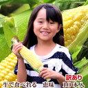 生で食べれるともろこし 北海道富良野産 フルーツとうもころこし 恵味(めぐみ)【訳あり】 Mサイズ 10本入り 送料無料