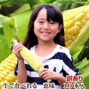 【生】で食べれるトウモロコシ 北海道富良野産 訳あり 恵味 Mサイズ 10本入り 【RCP】【10P03Dec16】