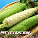 とうもろこし 北海道富良野産 激甘 トウモロコシ ピュアホワイト 2Lサイズ 5本