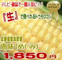TVで人気の生で食べれるトウモロコシ サニーショコラ・味来・ピュアホワイトを超えた甘さ!送...