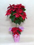 クリスマス アイテム チブサン オリジナル ポインセチア ホライズンレッド スタンダード トピアリー プレゼント