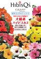 【農家直送】夏の夜も咲き続けるロングライフ・ハイビスカス4号☆選べる2鉢セット!