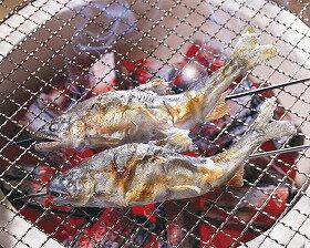 【季節限定:夏食材】輸入)冷凍鮎(串打ち) 約100g×10尾 <4月末-8月>(夏の素材 あゆ アユ 鮎)