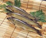 冷凍鮎 1kg(11尾)(冷凍食品 素焼き 天ぷら 業務用食材 夏 魚)