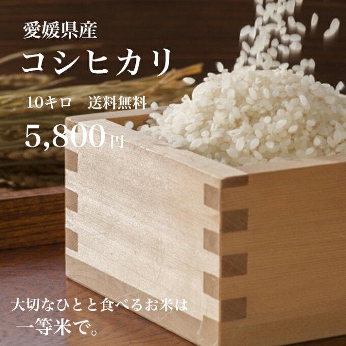 【送料無料】愛媛県産♪完全一等米!検査済み「コシヒカリ10kg(5kgx2)」