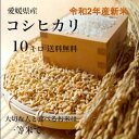 【送料無料】令和2年産新米!愛媛県産♪完全一等米!検査済み「コシヒカリ10kg(5kgx2)」