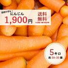 人参(国産)5キロ