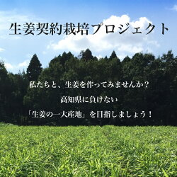 高知県産種生姜近江生姜(白)10kg【種子/種生姜/生姜/栽培