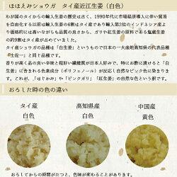 タイ産生姜の説明