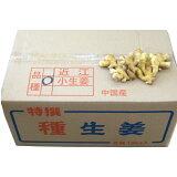 中国産種生姜近江生姜(黄)10kg(近江生姜白)【種子/種生姜/生姜/栽培