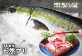送料無料【スピード出荷】【日本海産】天然ブリ[生] 1匹(4kg程度)【お刺身・照り焼き♪】