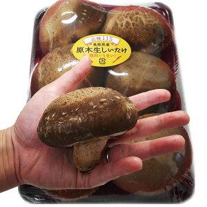 鳥取県産(品種115)「原木生しいたけ(椎茸)」肉厚ジャンボサイズ6〜8本入り[冷蔵便]【送料…