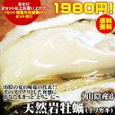 【早期予約】たった一日で3000個以上売れた[生]岩牡蠣!今だけ半額♪送料無料!天然岩牡蠣(カ...