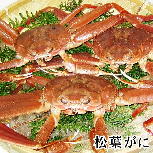 松葉がに[生][足折れ混じり] 約1.5キロセット(3-5枚程度入)蟹の本場!鳥...