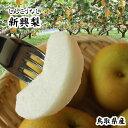 """鳥取県の""""秋""""の味覚!! 「ほんのり甘く、程よい歯ざわり。しかも長期保存にも強い」鳥取県産の..."""