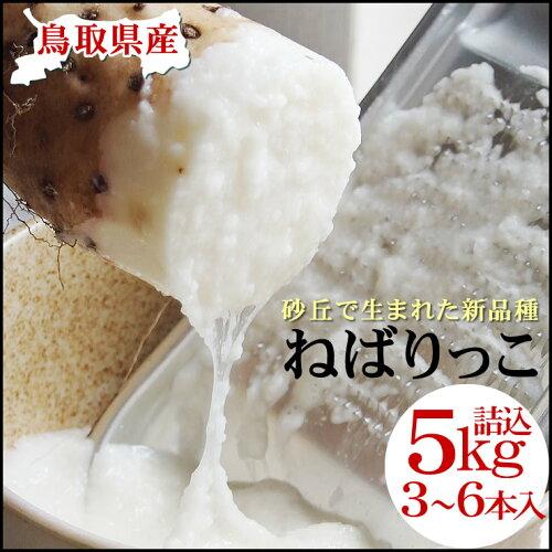 (3-6本入)約5kg送料無料鳥取県特産品とろろ[常温]贈答用【楽ギフ_の...